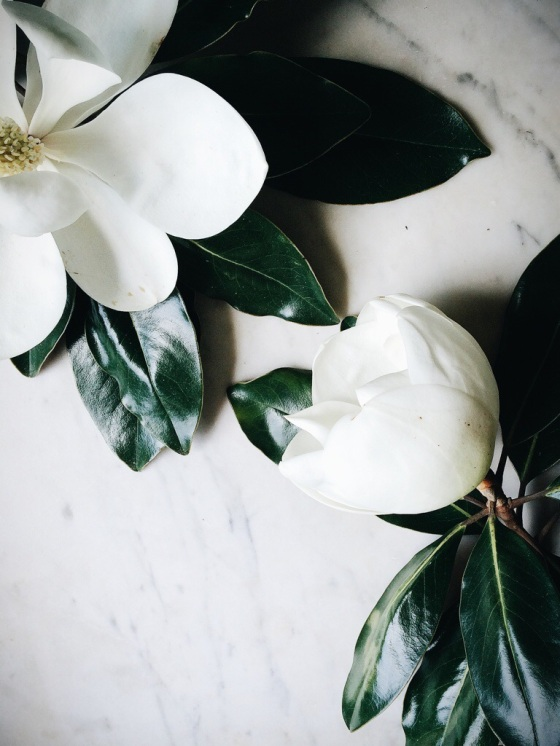 Magnolias | for the love of the south